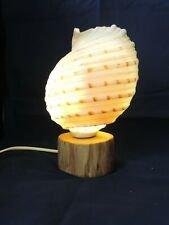 Tonna Tessa Shell Lamp on driftwood base, new