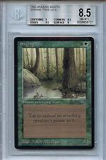 MTG Arabian Nights Singing Tree BGS 8.5 NM-MT+ Magic Card WOTC 8721