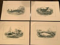 Lot of 4 Vintage Maritime Whale prints published in the 1800s by William Lizar