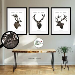 Stag Print Set of 3 Deer Prints Wall Art Photo Picture Print ONLY A4 or A3