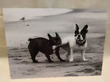 French Bulldog or a Boston Terrier. Not letting go. Happy Anniversary by Avanti