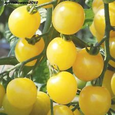 Tomato White Cherry Certified Organic Seeds VERY SWEET  DELICIOUS HEAT TOLERANT