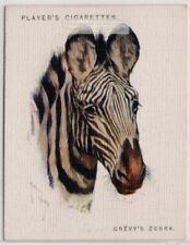 Grevy's Zebra Africa Equus grevyi Kenya 1930s Trade Advertising Card
