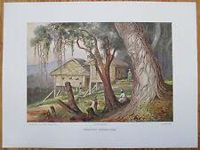 HAECKEL: Large Chromolithographic Print Lambugana Ceylon Sri Lanka - 1905