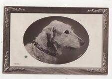 Ross Vintage Dog RP Postcard US081