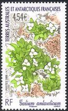 "FSAT/TAAF 2008 ""Galium antarcticum""/Flowers/Plants/Nature/Animated 1v (n30225)"