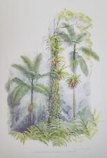 Paper Original Botanical Art Prints