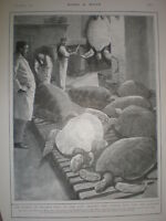 Turtles for the soup Guildhall kitchens City of London 1901 old print