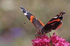 BENEFICIAL BUG MIX - 100 seeds insect attracting pollinators flower garden herbs
