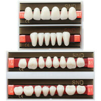 Dental B1 Shade T9 L68 Two-Layer Synthetic Resin Teeth Whitening Denture Tooth