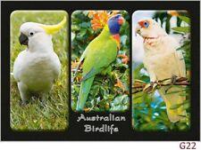 10 Australian Bird Postcards - Emu, Cockatoo, Lorikeet, Corella, Frogmouth