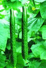 100 Cucumber Seeds Cuke Cucumis Sativus Organic Vegetable Seed S002