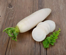 Radish Seeds Autumn giant Ukraine Heirloom Vegetable Seeds