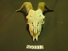 goat skull outdoors rustic decor hunting wildlife SG0312
