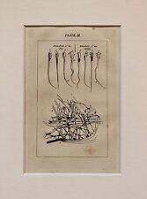 Buffon Antiguo montado impresión c.1800 - grabado-organismos microscópicos esperma