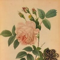 VTG Botanic Art Print Redoute Wildflowers Flora Engraving Repro ROSE ROSES