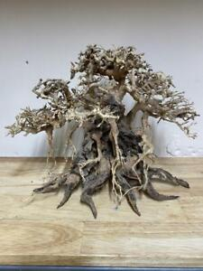 Bonsai Driftwood Tree decoration for Aquariums Shrimp Fish