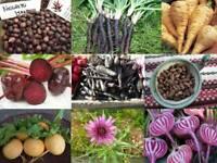 Spezielles Wurzelgemüse - Sortiment - 9 Sorten - 150+ Samen - Saatgut - AKTION!