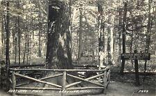 Grayling Michigan~RPPC Rustic Fence Around Monarch White Pine Tree~1949 Postcard