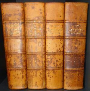 TESTUT : Traité d'anatomie humaine / 8° édition / 1928 - 1931