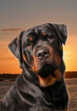 Rottweiler A6 Blank Card By Starprint