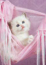 SUPERB CUTE WHITE KITTEN CANVAS #6 QUALITY CAT CANVAS PICTURE A1 WALL ART
