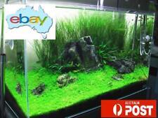500+ AQUATIC FRESH WATER PLANT/GRASS SEEDS