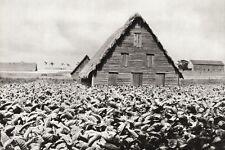 1934 Vintage 11x14 TOBACCO Field Farm Farmhouse Agriculture Landscape Photo Art