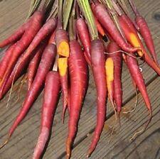 Vegetable Carrot Cosmic Purple Appx 400 seeds