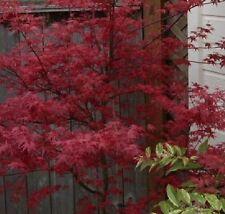 Autumn Light Watering Shrubs & Hedges