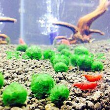 5 x  Marimo Moss Balls Live Aquarium Plant Fish tank Cladophora Shrimp (10mm)