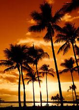 Tropical Horizon Hawaiian puesta de sol FOTO PLAYA Escena Vista Cuadro Póster