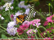 🔥 Schmetterlings Wiese Mischung 1000 Samen über 50 Arten Blumenwiese kein Gras