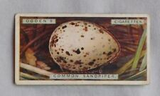 1923 Ogdens Bird's Eggs Common Sandpiper Egg #34 Tobacco Card Pop Out