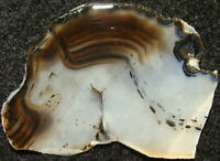 Nice MONTANA AGATE slab … from old-time stash … great bands & dendrites