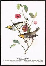 1930s Original Vintage Audubon Hermit Warbler Bird Limited Edition Art Print