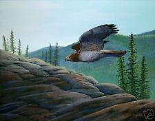 Red Tailed Hawk Print 11 x 14 by artist Doug Walpus Signed Birds of Prey