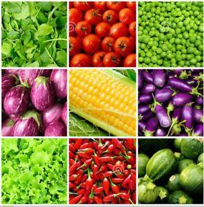 #7 Heirloom Vegetable Seeds 6 Variety Garden Set Emergency Survival NON-GMO 150+