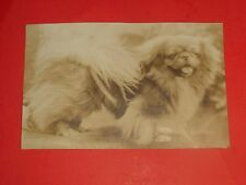 ZY564 Vntg RPPC Ad Lays Ti-Ko Jack Puppies for Sale Home Raised Pekingese Dogs