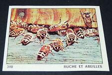 N°310 RUCHE ET ABEILLE INSECTE PANINI 1970 TOUS LES ANIMAUX EDITIONS DE LA TOUR