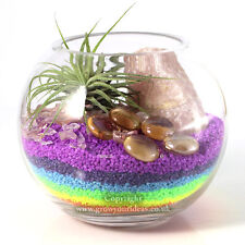 Air plant Kit glass Terrarium Rainbow colours, Rose Quartz and Green Ionantha