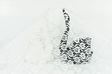 """Shiny Pure White Rose Lace Fabric Flower Style 44"""" wide [5free1] - Free Shipping"""