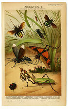 Insects, Chromolithograph from ca 1880