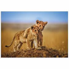 Lion Cub Art Lion Photography Images of Nature on Acrylic