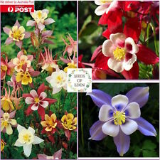"25 AQUILEGIA ""Mckana Mixed"" SEEDS(Aquilegia viridiflora), Perfect garden flowers"