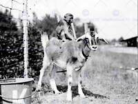 VINTAGE PHOTOGRAPHY CHAINED MONEKY RIDING GOAT NEW ART PRINT POSTER CC5236