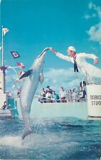 Marineland Florida~Marine Studios Oceanarium~Sailor Feeds Porpoise~1960s PC