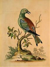 GEORGE EDWARDS ORIGINAL HAND COLORED BIRD ETCHING: PLATE 109: LONDON, 1746