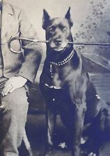 Antique photo HUGE IMPRESSIVE GREAT DANE DOG HOLDS CANE man w BIG mustache!