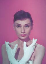Audrey Hepburn (Fuchsia) Image Postcard 10cm x 15cm Official Licensed Merchandis
